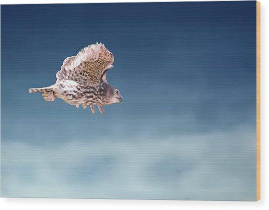Barking Owl In Flight Wood Print