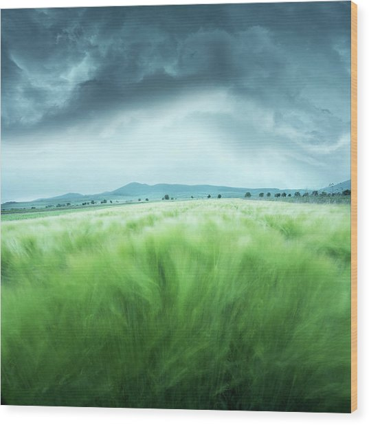 Barley Field Wood Print by Floriana Barbu
