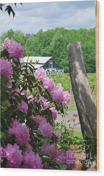Barn And Blossoms Wood Print by Gayle Melges