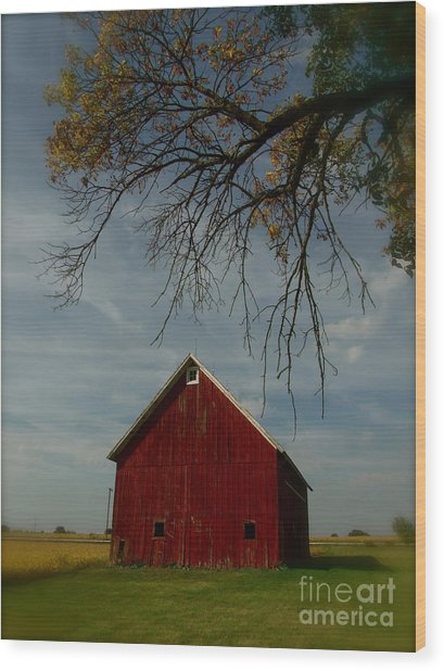 Barn And Box Elder Wood Print