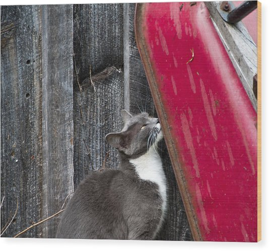 Barn Cat Wood Print by Nickaleen Neff