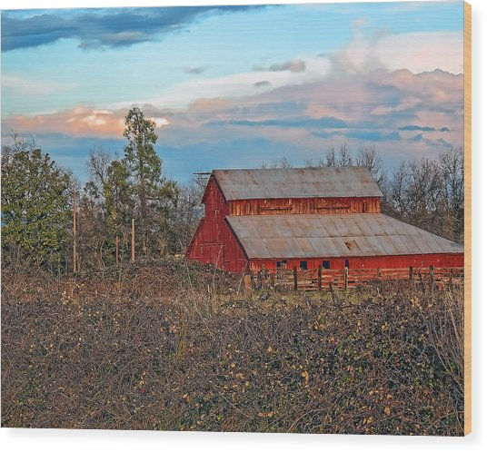 Barn In The Berry Bushes Wood Print