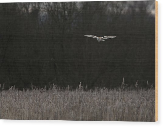 Barn Owl The Silent Hunter Wood Print