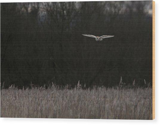 Barn Owl The Silent Hunter Wood Print