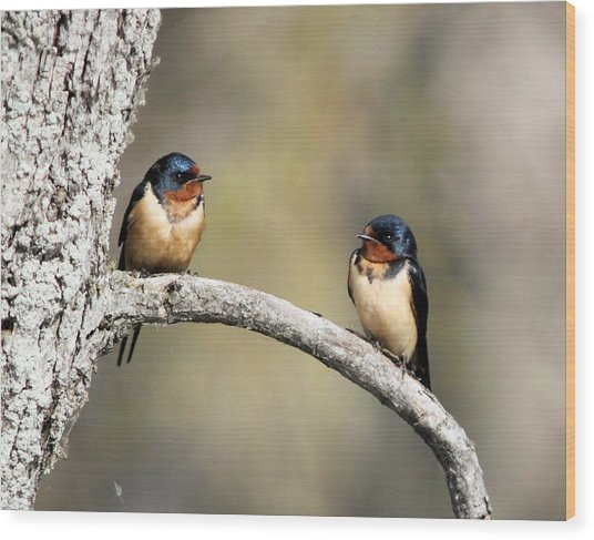 Barn Swallows Wood Print
