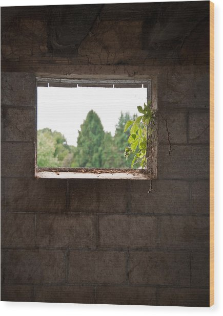 Barn With A View Wood Print by Nickaleen Neff