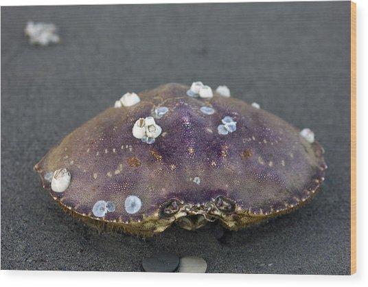 Barnacled Crab Shell Wood Print