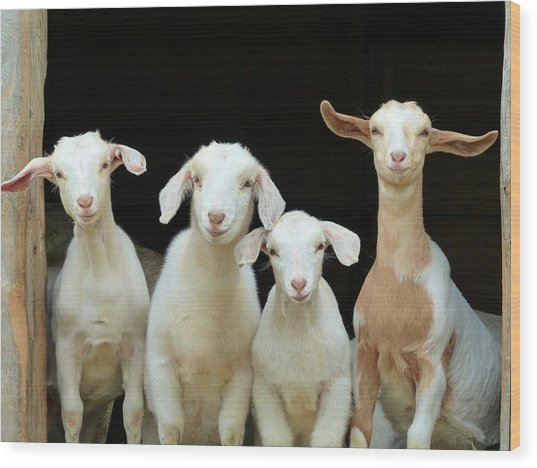 Barnyard Buddies Wood Print