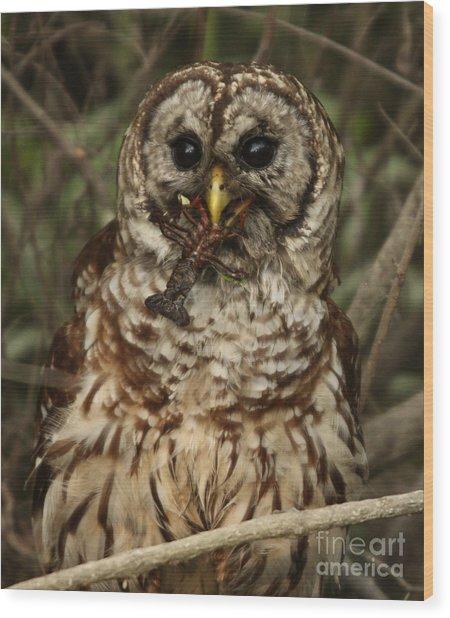 Barred Owl Eating Crawfish Wood Print by Kelly Morvant