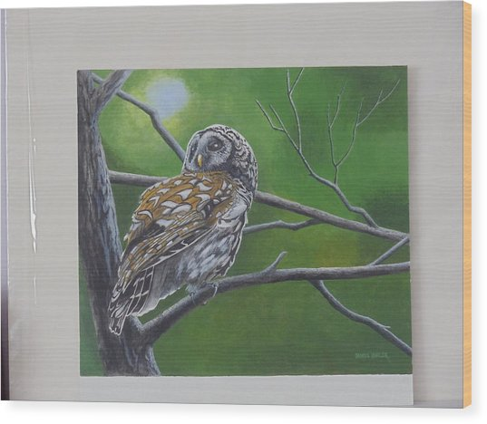 Barred Owl Wood Print by James Lawler