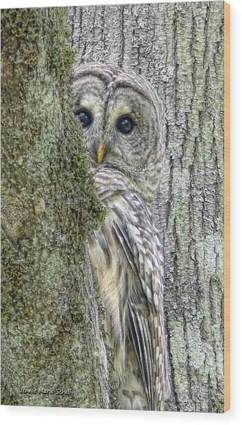 Barred Owl Peek A Boo Wood Print