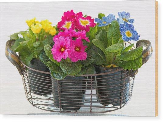 Basket Of Primroses Wood Print