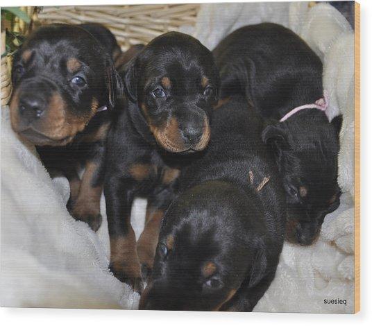 Basket Of Puppies Wood Print by Sue Rosen