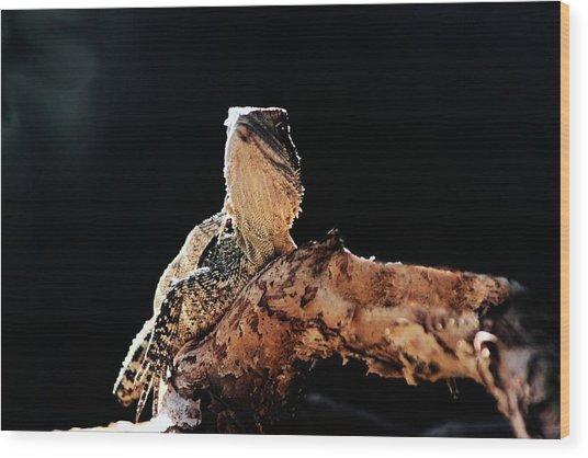Basking Dragon Wood Print