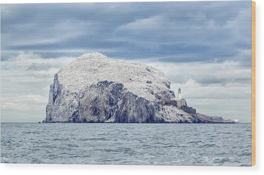 Bass Rock Wood Print