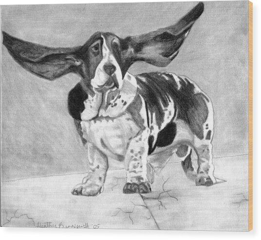 Basset Artesien Normand Dog Portrait Wood Print by Olde Time  Mercantile