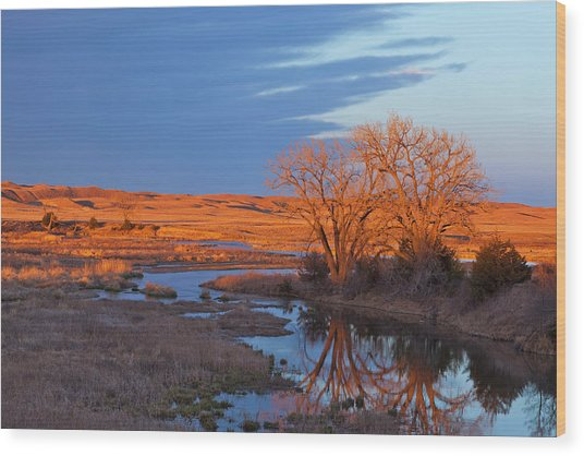 Bathed In Sunset Light The Calamus Wood Print