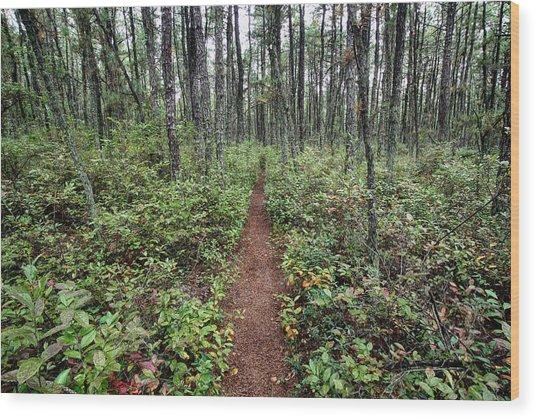 Batona Trail Wood Print by Dawn J Benko
