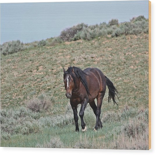 Bay Mustang Stallion Wood Print