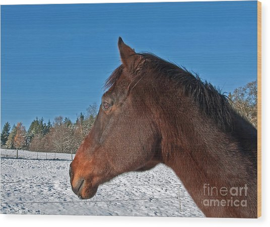 Bay Thoroughbred Horse Side View In Winter Wood Print