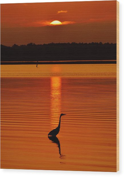 Bayside Ripples - A Heron Takes An Evening Stroll As The Sun Sets Behind The Clouds On The Bay Wood Print