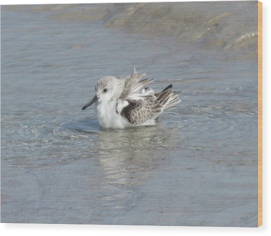 Beach Bird Bath 4 Wood Print