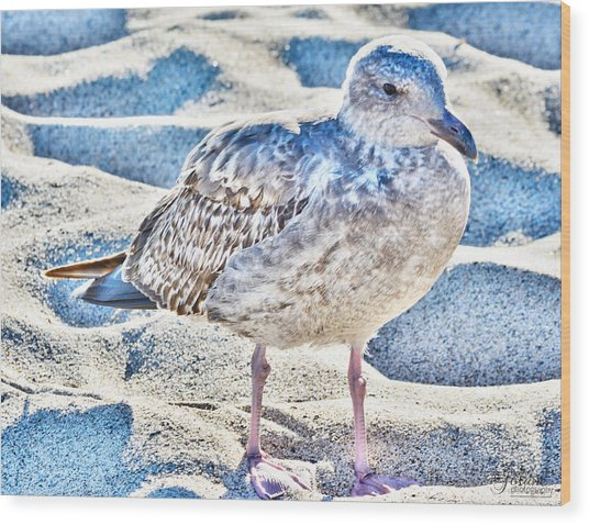 Beach Bird Wood Print