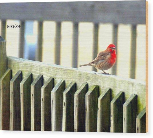 Beach Bird Wood Print by Sue Rosen