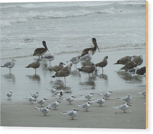 Beach Birds Wood Print