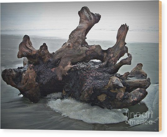 Beach Driftwood In Color Wood Print