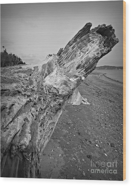Beach Driftwood View Wood Print