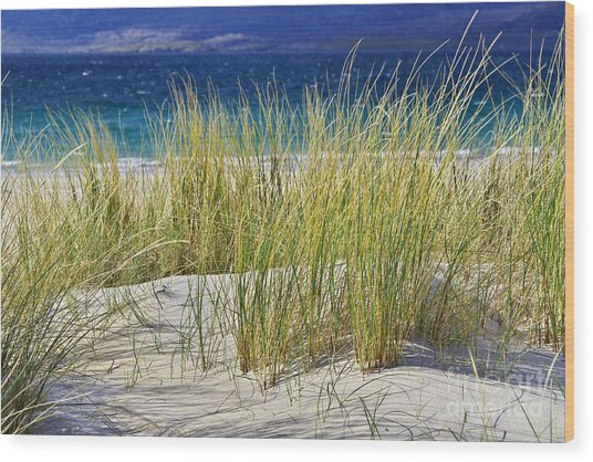 Beach Gras Wood Print