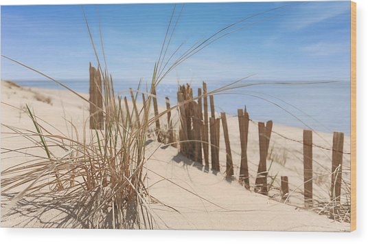 Beach Grass II Wood Print by Dapixara Art