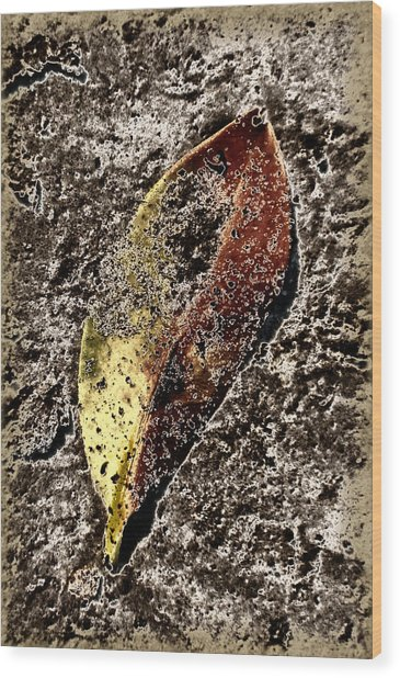 Beach Leaf Wood Print by Geraldine Alexander