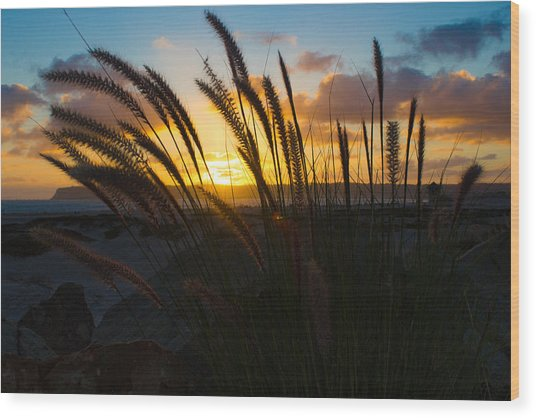 Beach Sunset Wood Print by Marc Bottiglieri