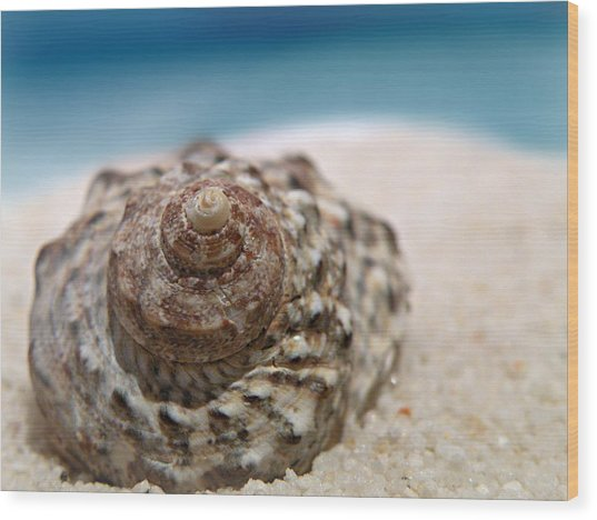 Beach Treasure Wood Print