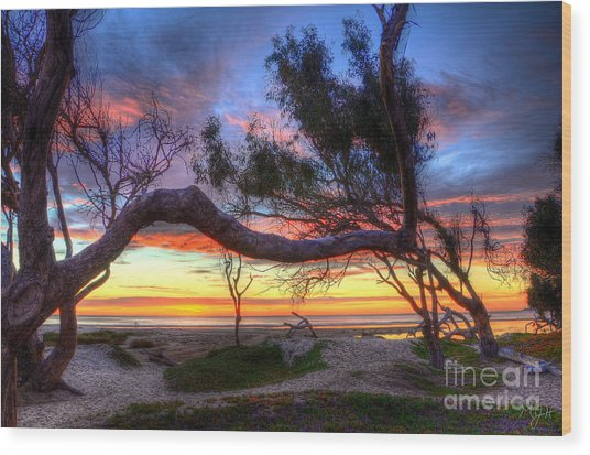 Beach Tree Sunset View Wood Print
