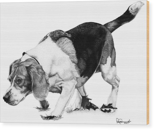 Beagle On The Hunt Wood Print by Rob Christensen