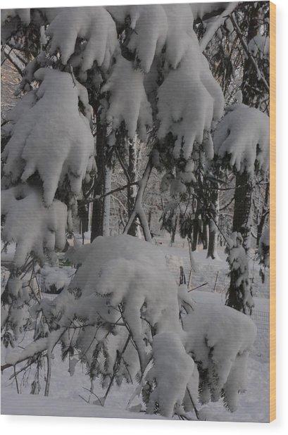 Bear Claws Wood Print