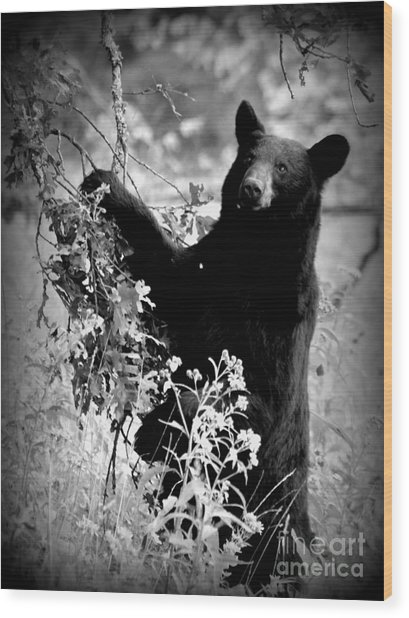 Bear Pose Wood Print