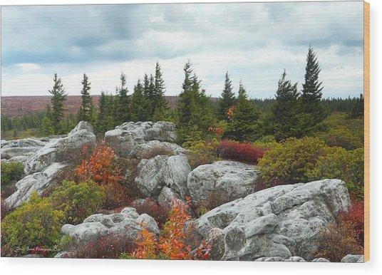 Bear Rocks Wood Print