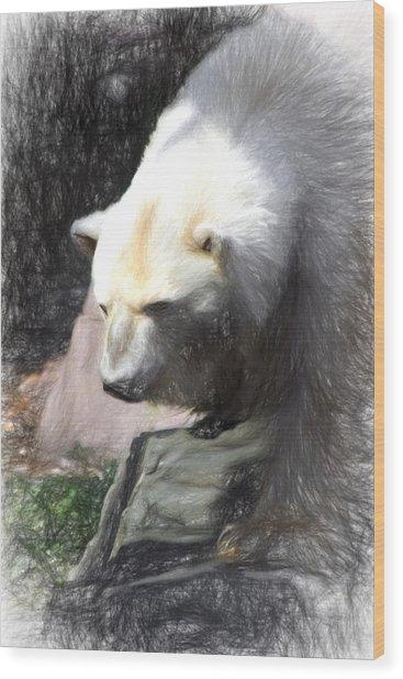 Bear Visions Wood Print
