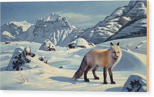 Beartooth Fox Wood Print