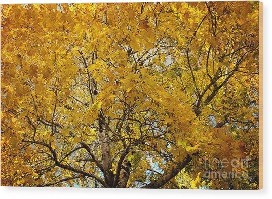 Beautiful Autumn Tree Wood Print by Jolanta Meskauskiene