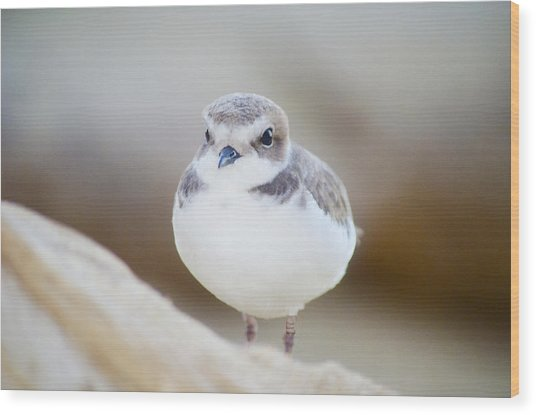 Beautiful Bird Wood Print