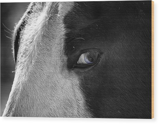 Beautiful Blind Soul Horse Wood Print