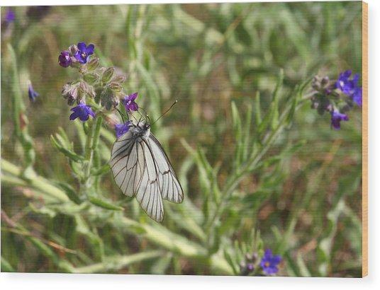 Beautiful Butterfly In Vegetation Wood Print
