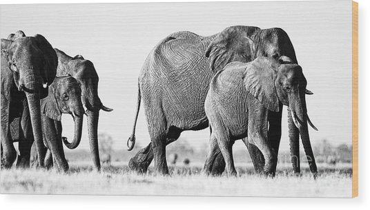 Beautiful Elephant Black And White 55 Wood Print