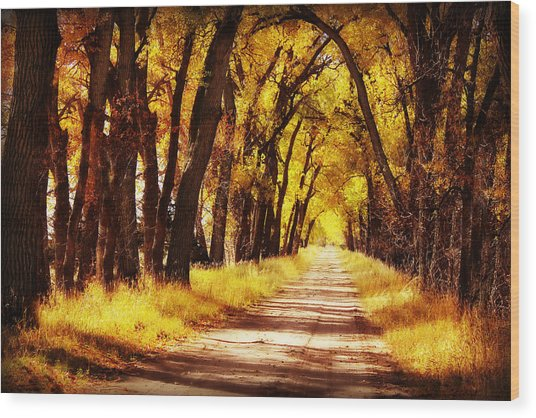 Beautiful Fall Day In Nebraska Wood Print