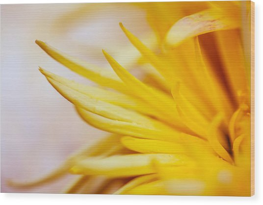 Spring Flower - Nature Photography Wood Print